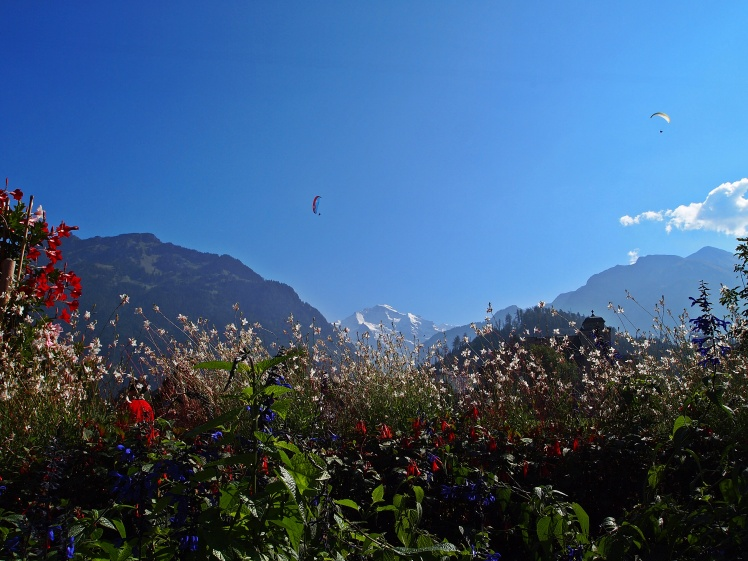 Jungfrau Mountain and a paraglider, framed by perfect Switzerland flowers.