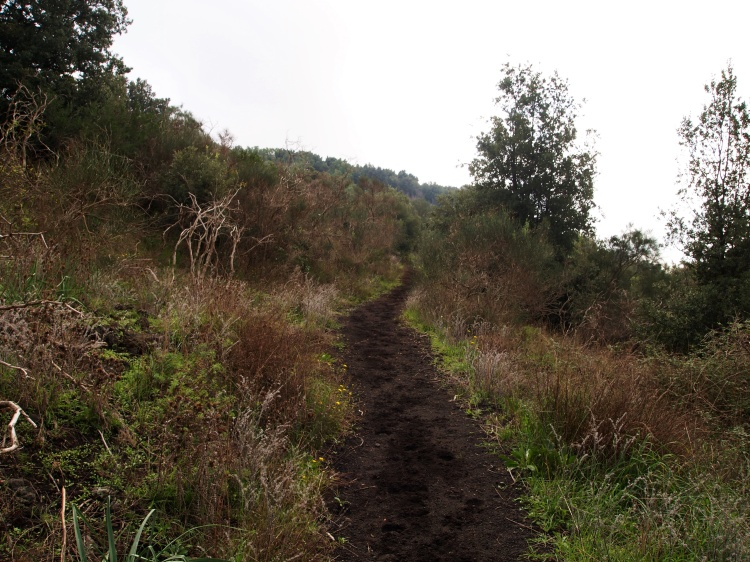 Following the volcanic soil path!