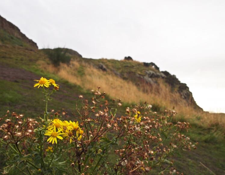 It definitely didn't feel like spring, but fall in Edinburgh seemed to be just as beautiful.